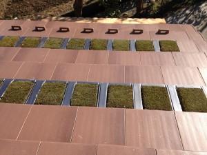 苔瓦と米松の屋根